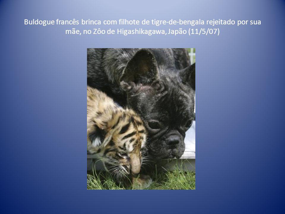 Cão e gato são flagrados 'conversando' em terreno no Pontal do Paranapanema, em São Paulo (21/06/2000)