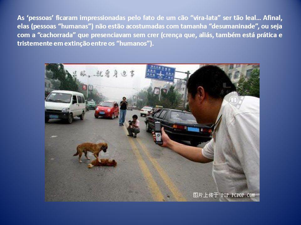 Apesar do tráfego pesado, o cachorro não abandonava seu amigo – verdadeiro e fiel AMIGO.
