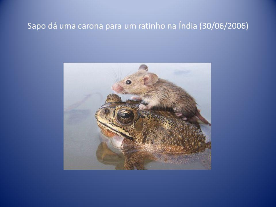Cadelinha ficou imóvel para amamentar filhote de gato abandonado em Zamora, cidade da Espanha (25/07/2000)