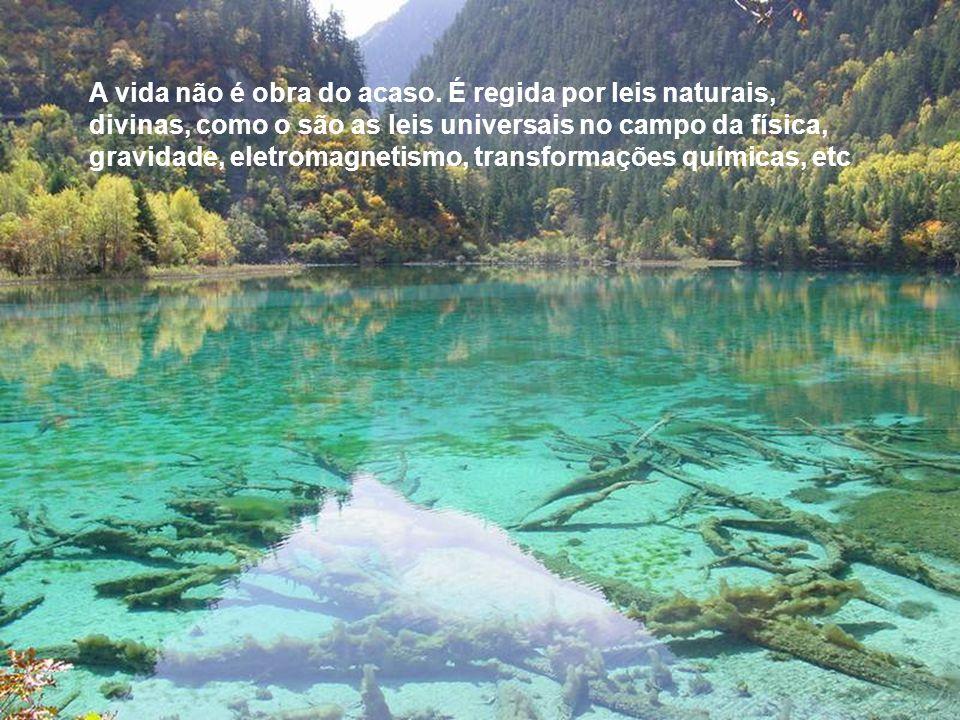 A Vida é o grande laboratório divino para o aprimoramento infinito do espírito.