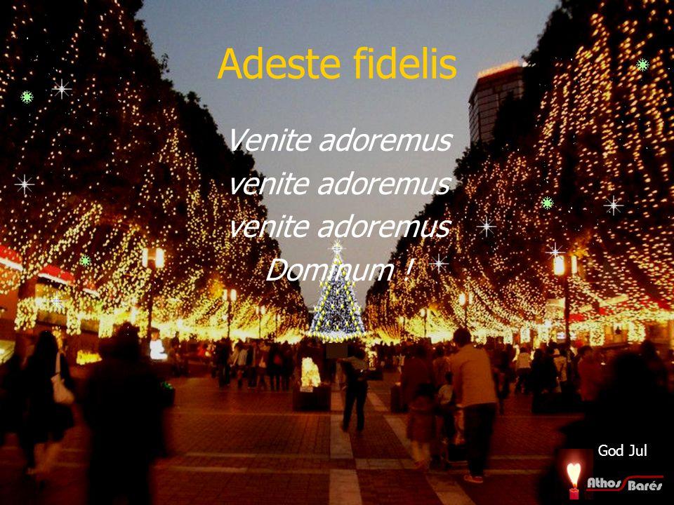 Adeste fidelis Venite adoremus venite adoremus Dominum ! God Jul