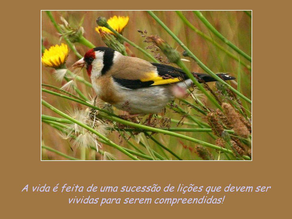 A vida é feita de uma sucessão de lições que devem ser vividas para serem compreendidas!