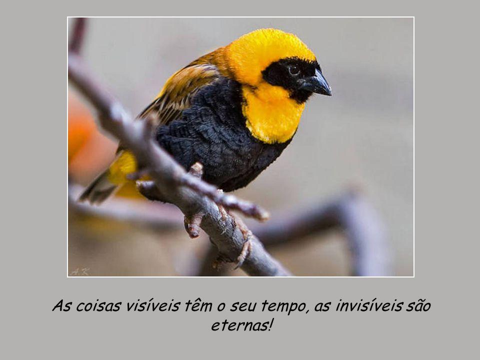 As coisas visíveis têm o seu tempo, as invisíveis são eternas!