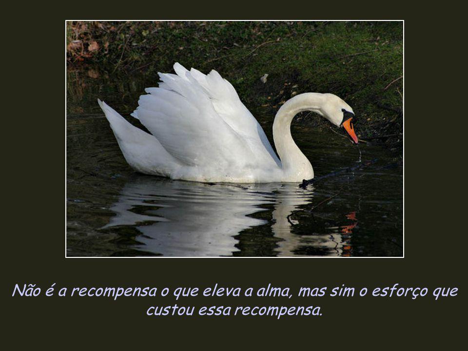 Não é a recompensa o que eleva a alma, mas sim o esforço que custou essa recompensa.