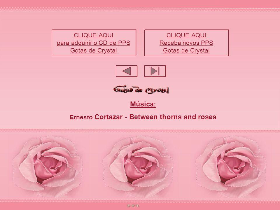 Talvez não seja tarde... Roseiras velhas também produzem rosas lindas e viçosas. Basta recultivá-las...