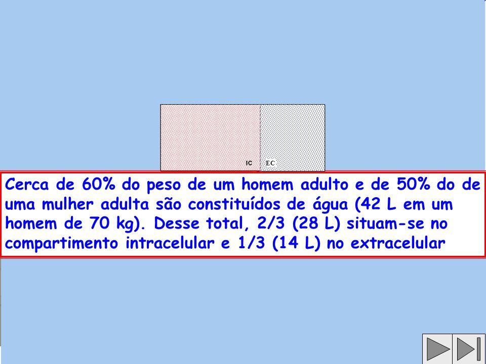 Cerca de 60% do peso de um homem adulto e de 50% do de uma mulher adulta são constituídos de água (42 L em um homem de 70 kg).