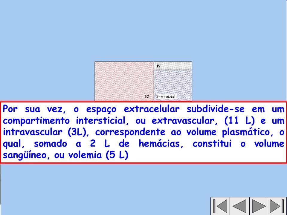 Por sua vez, o espaço extracelular subdivide-se em um compartimento intersticial, ou extravascular, (11 L) e um intravascular (3L), correspondente ao volume plasmático, o qual, somado a 2 L de hemácias, constitui o volume sangüíneo, ou volemia (5 L) Intersticial