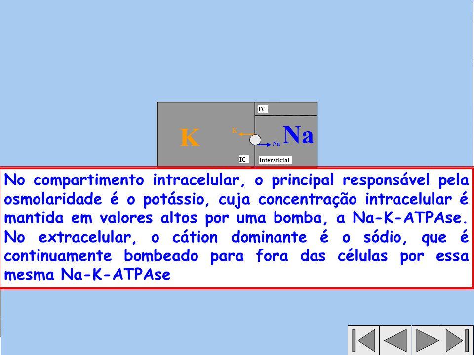 No compartimento intracelular, o principal responsável pela osmolaridade é o potássio, cuja concentração intracelular é mantida em valores altos por uma bomba, a Na-K-ATPAse.