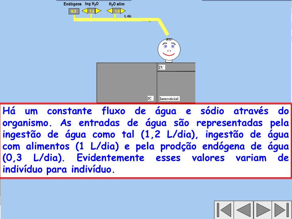 Intersticial IC IV Há um constante fluxo de água e sódio através do organismo.