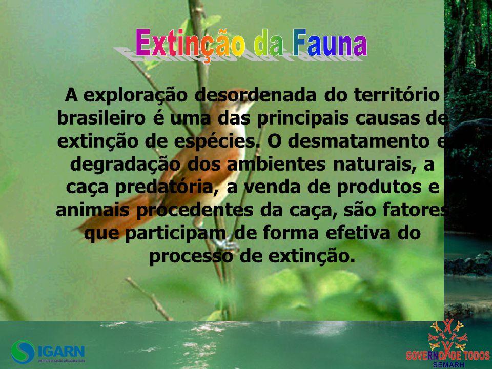 A exploração desordenada do território brasileiro é uma das principais causas de extinção de espécies.