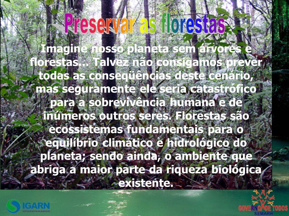 Imagine nosso planeta sem árvores e florestas...