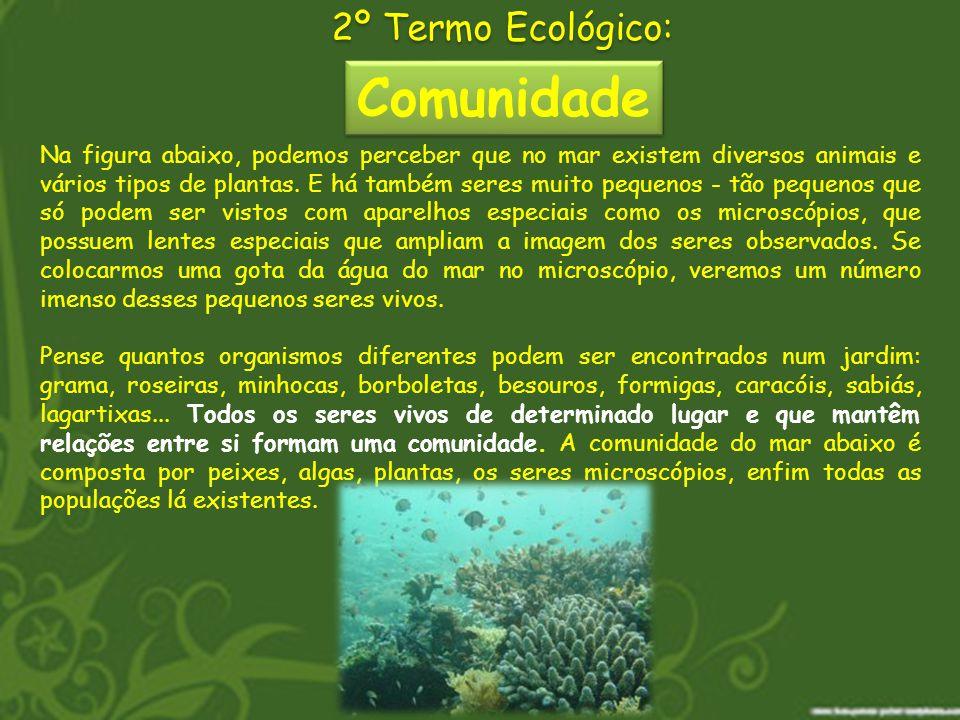 Comunidade 2º Termo Ecológico: Na figura abaixo, podemos perceber que no mar existem diversos animais e vários tipos de plantas. E há também seres mui