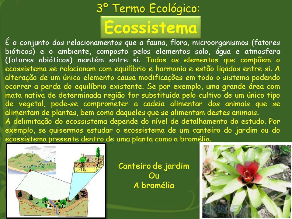 Ecossistema 3º Termo Ecológico: É o conjunto dos relacionamentos que a fauna, flora, microorganismos (fatores bióticos) e o ambiente, composto pelos e
