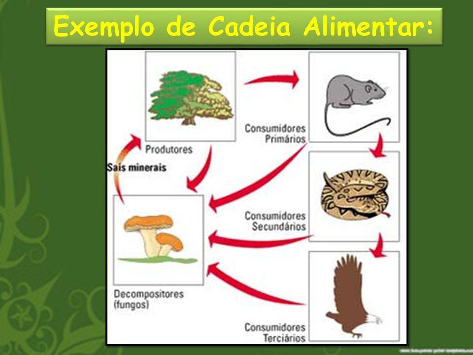 A Teia Alimentar Na natureza, alguns seres podem ocupar vários papéis em diferentes cadeias alimentares.