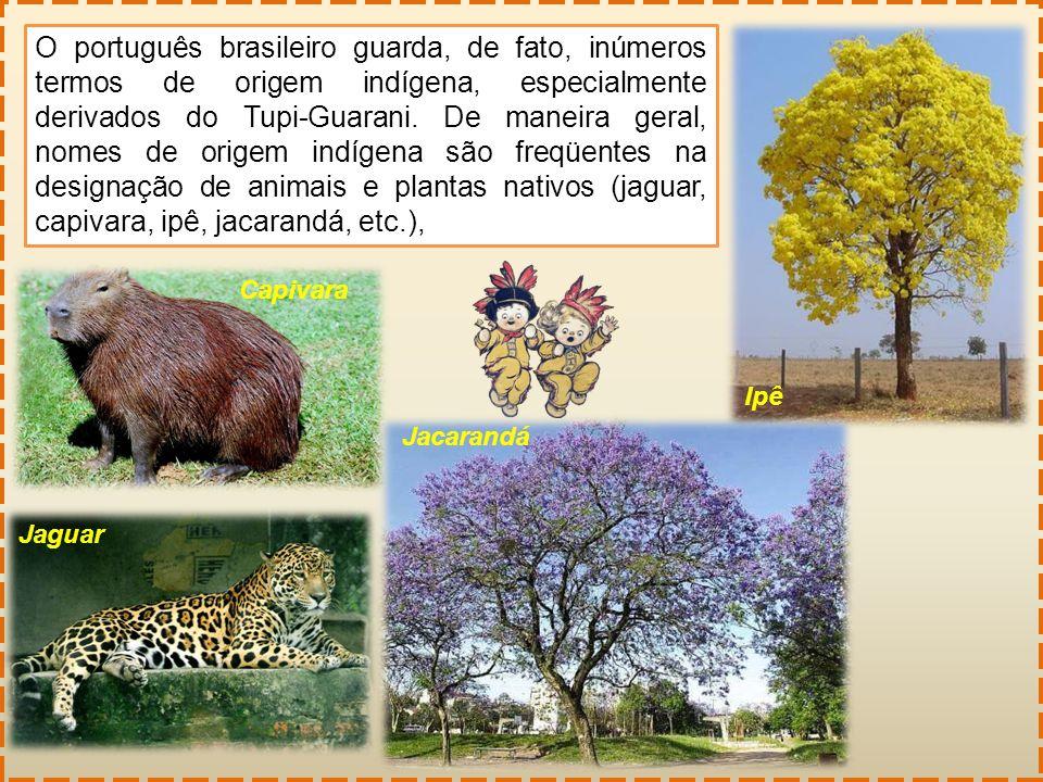 O português brasileiro guarda, de fato, inúmeros termos de origem indígena, especialmente derivados do Tupi-Guarani. De maneira geral, nomes de origem