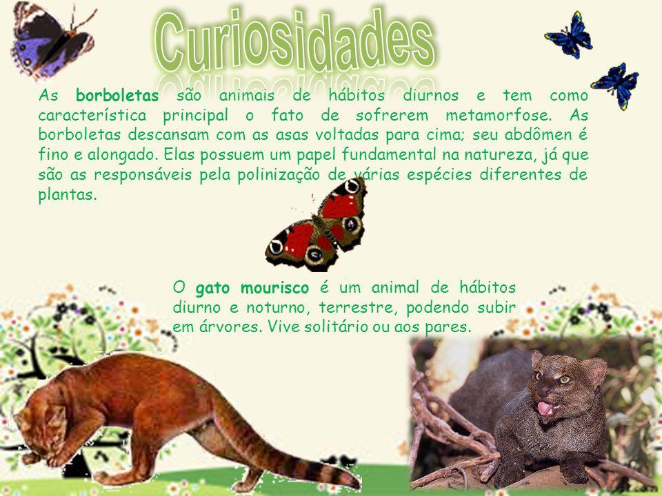As borboletas são animais de hábitos diurnos e tem como característica principal o fato de sofrerem metamorfose. As borboletas descansam com as asas v