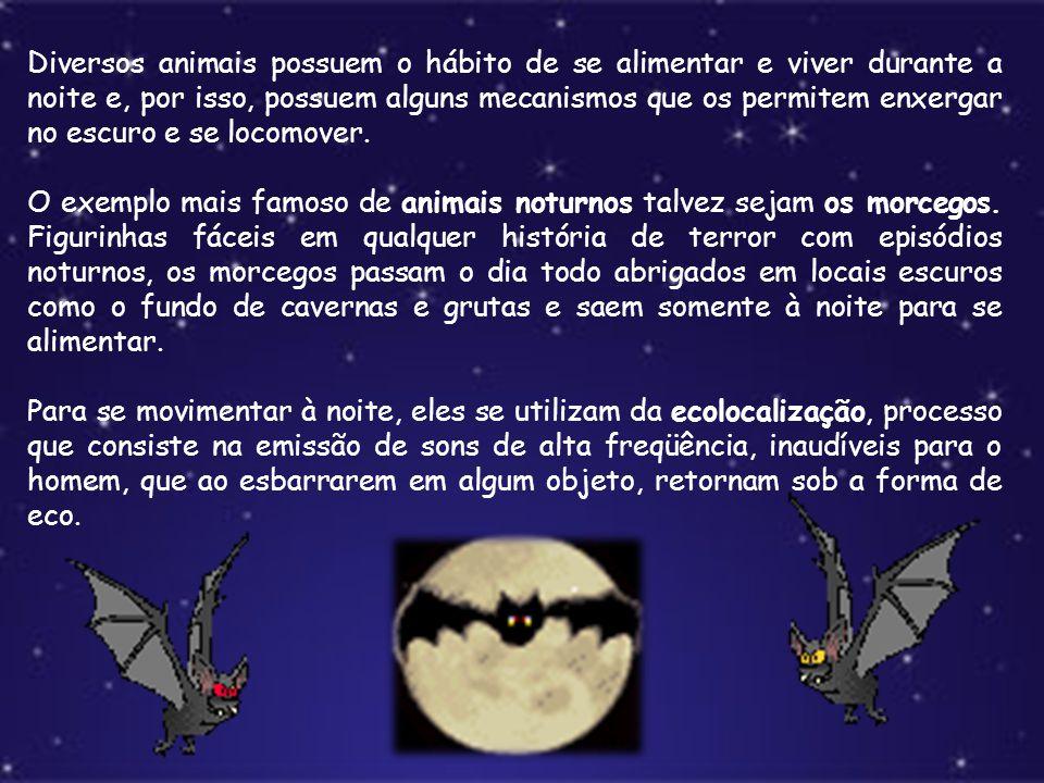 Diversos animais possuem o hábito de se alimentar e viver durante a noite e, por isso, possuem alguns mecanismos que os permitem enxergar no escuro e