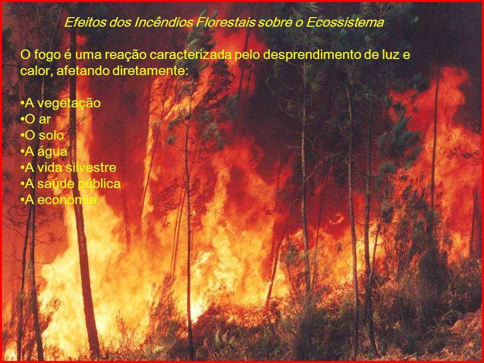 Efeitos dos Incêndios Florestais sobre o Ecossistema O fogo é uma reação caracterizada pelo desprendimento de luz e calor, afetando diretamente: A veg