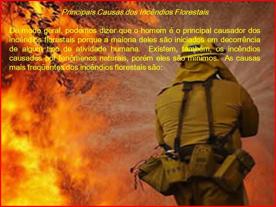 Principais Causas dos Incêndios Florestais De modo geral, podemos dizer que o homem é o principal causador dos incêndios florestais porque a maioria d