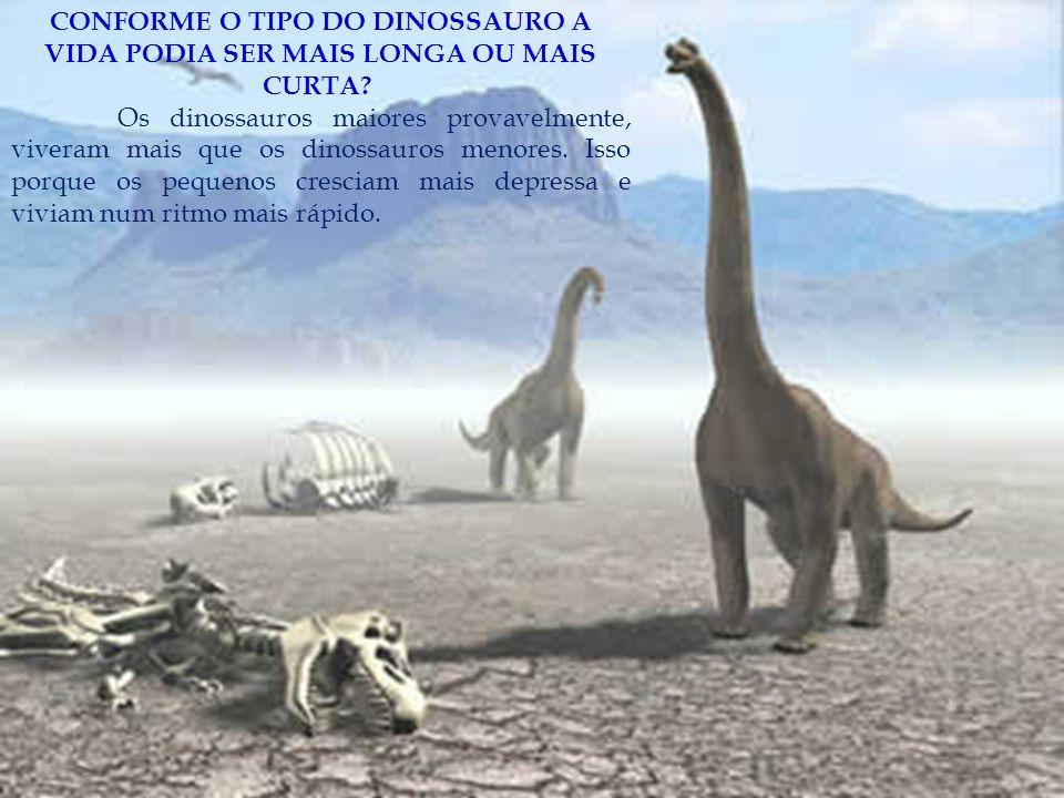 CONFORME O TIPO DO DINOSSAURO A VIDA PODIA SER MAIS LONGA OU MAIS CURTA? Os dinossauros maiores provavelmente, viveram mais que os dinossauros menores