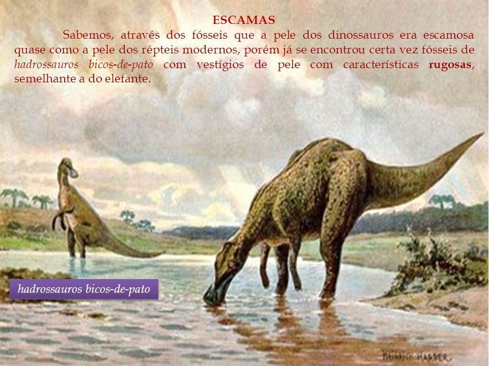 ESCAMAS Sabemos, através dos fósseis que a pele dos dinossauros era escamosa quase como a pele dos répteis modernos, porém já se encontrou certa vez f