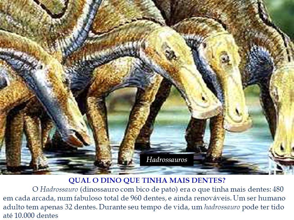 QUAL O DINO QUE TINHA MAIS DENTES? O Hadrossauro (dinossauro com bico de pato) era o que tinha mais dentes: 480 em cada arcada, num fabuloso total de