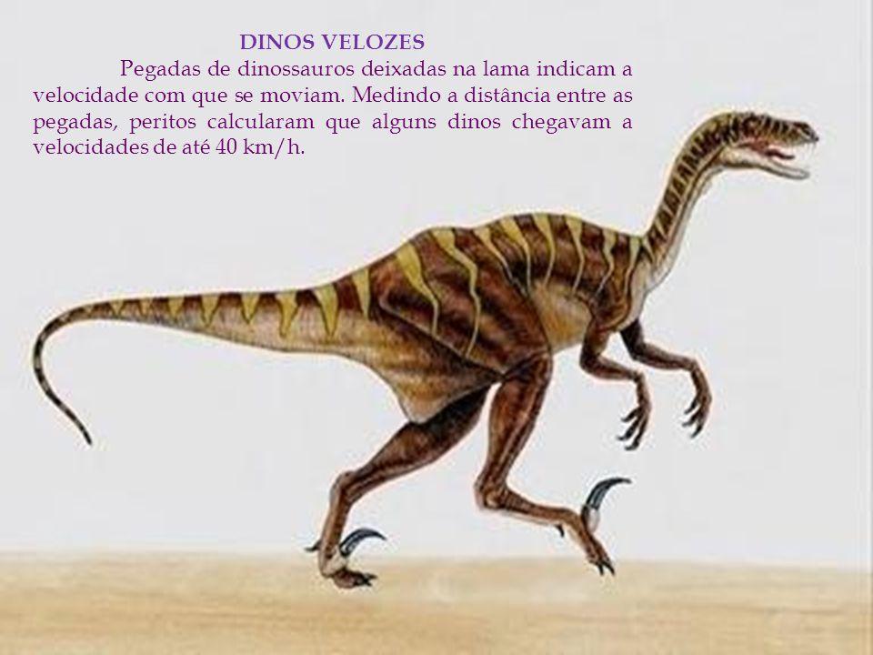 DINOS VELOZES Pegadas de dinossauros deixadas na lama indicam a velocidade com que se moviam. Medindo a distância entre as pegadas, peritos calcularam