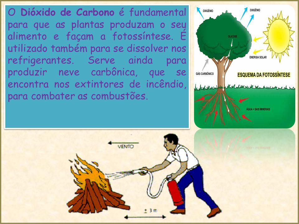 O Dióxido de Carbono é fundamental para que as plantas produzam o seu alimento e façam a fotossíntese.