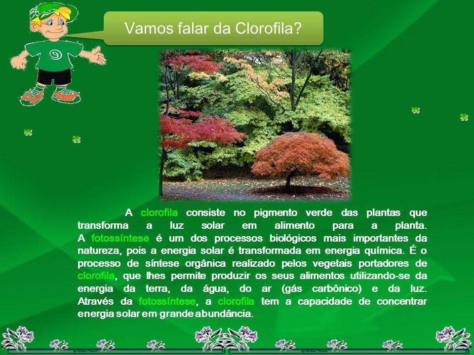Vamos falar da Clorofila? A clorofila consiste no pigmento verde das plantas que transforma a luz solar em alimento para a planta. A fotossíntese é um