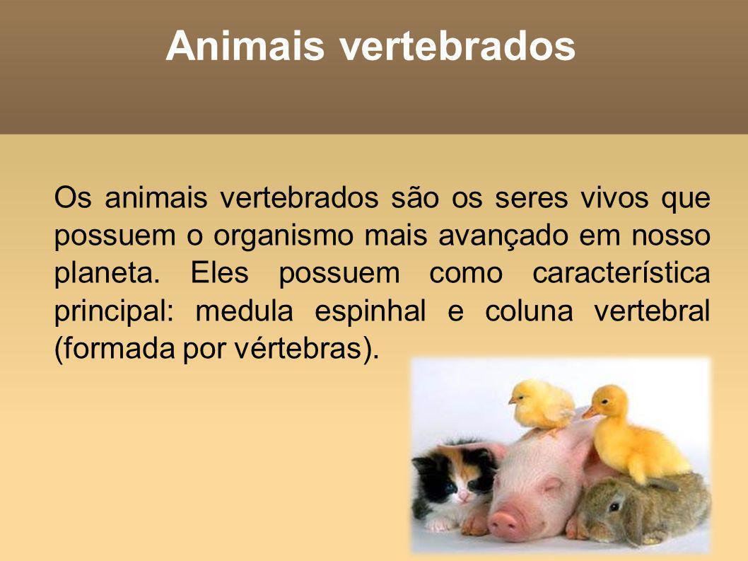 Classificação dos animais vertebrados: Os animais vertebrados Os animais vertebrados subdividem-se em: mamíferos, aves, répteis, peixes e anfíbios.
