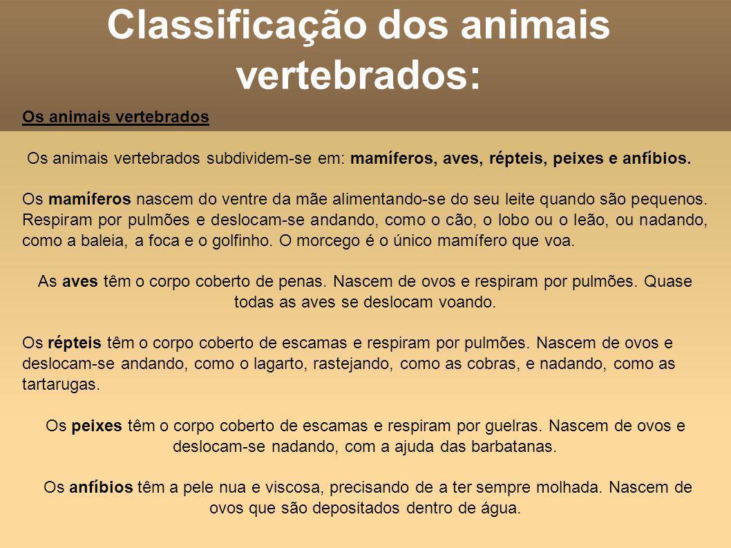 Classificação dos animais vertebrados: Os animais vertebrados Os animais vertebrados subdividem-se em: mamíferos, aves, répteis, peixes e anfíbios. Os