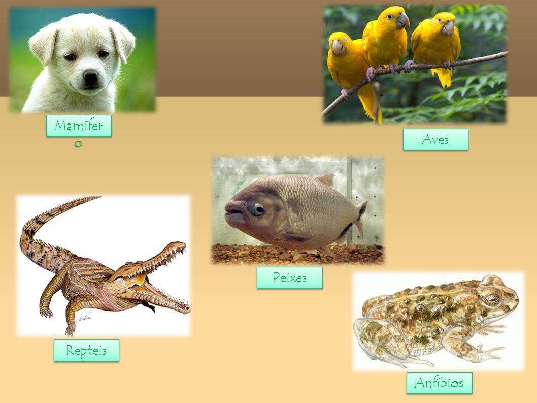 Animais invertebrados: Os animais invertebrados são aqueles que não possuem coluna vertebral.