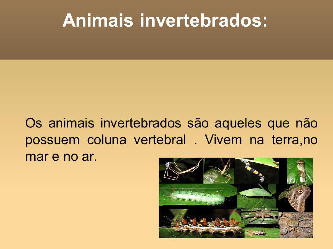 Animais invertebrados: Os animais invertebrados são aqueles que não possuem coluna vertebral. Vivem na terra,no mar e no ar.