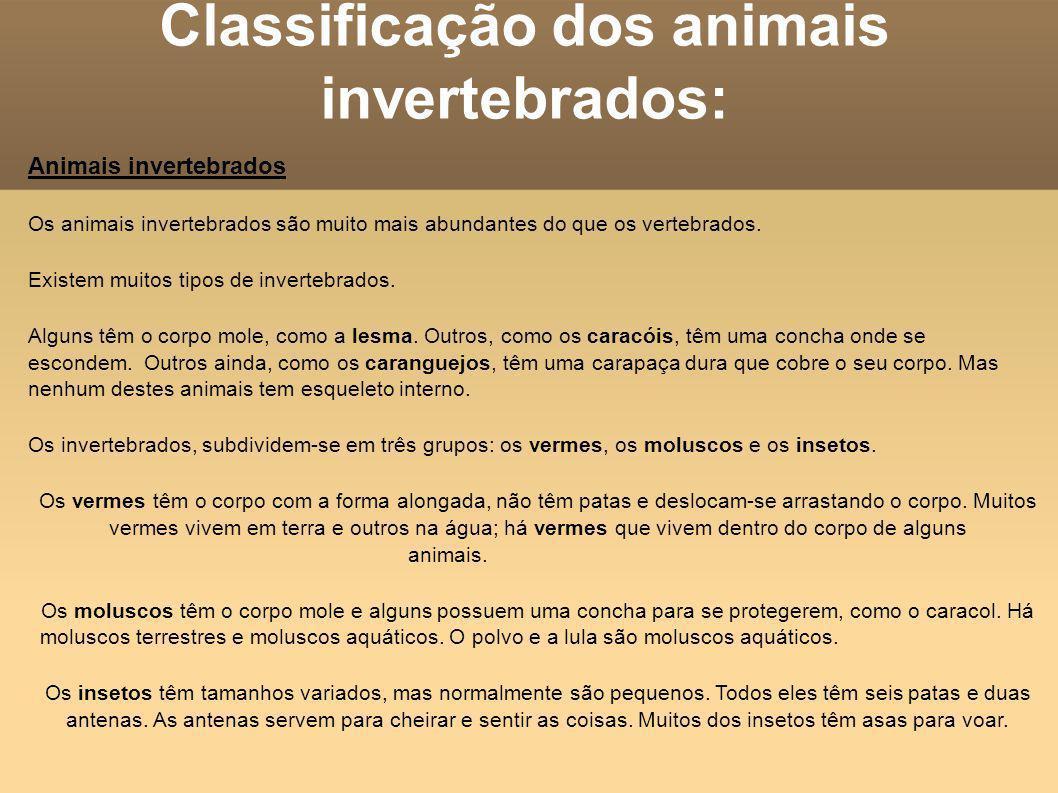 Classificação dos animais invertebrados: Animais invertebrados Os animais invertebrados são muito mais abundantes do que os vertebrados. Existem muito