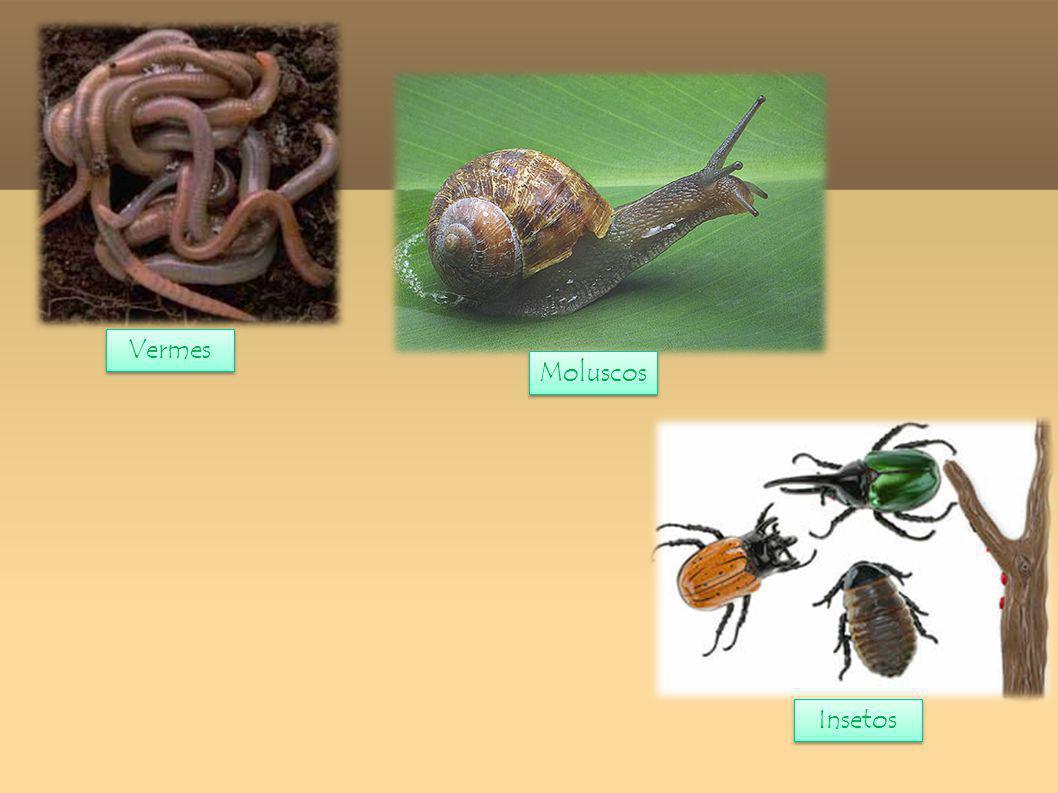 01.O que são animais Vertebrados. 02. O que são animais Invertebrados.