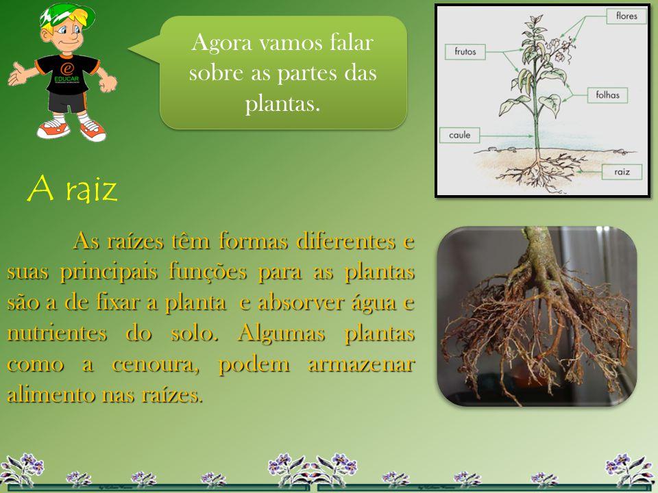 Agora vamos falar sobre as partes das plantas. A raiz As raízes têm formas diferentes e suas principais funções para as plantas são a de fixar a plant