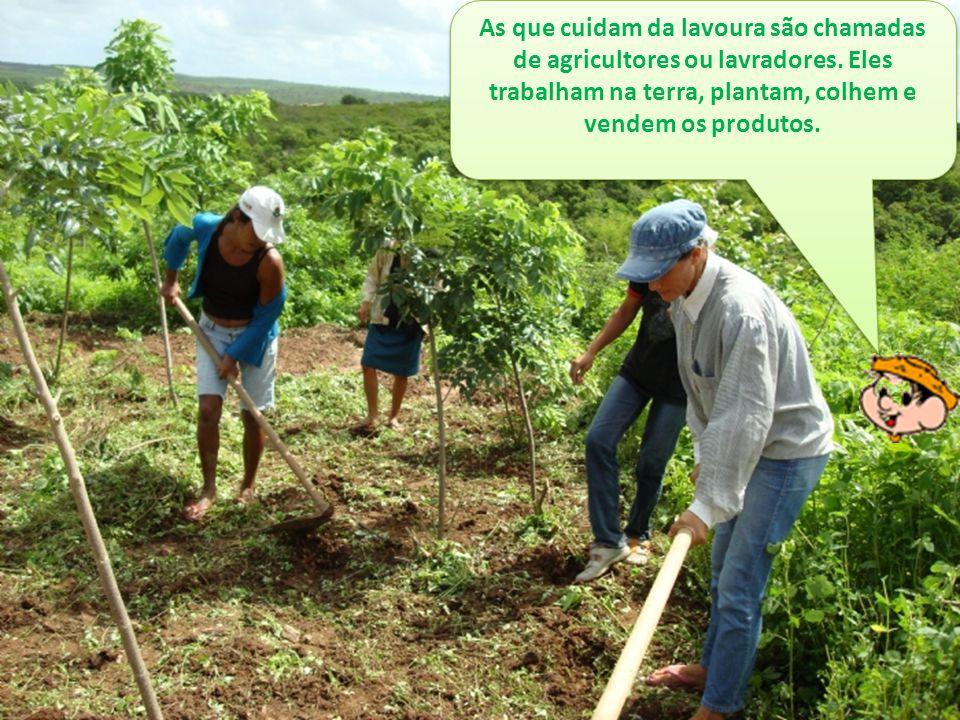 As que cuidam da lavoura são chamadas de agricultores ou lavradores. Eles trabalham na terra, plantam, colhem e vendem os produtos.