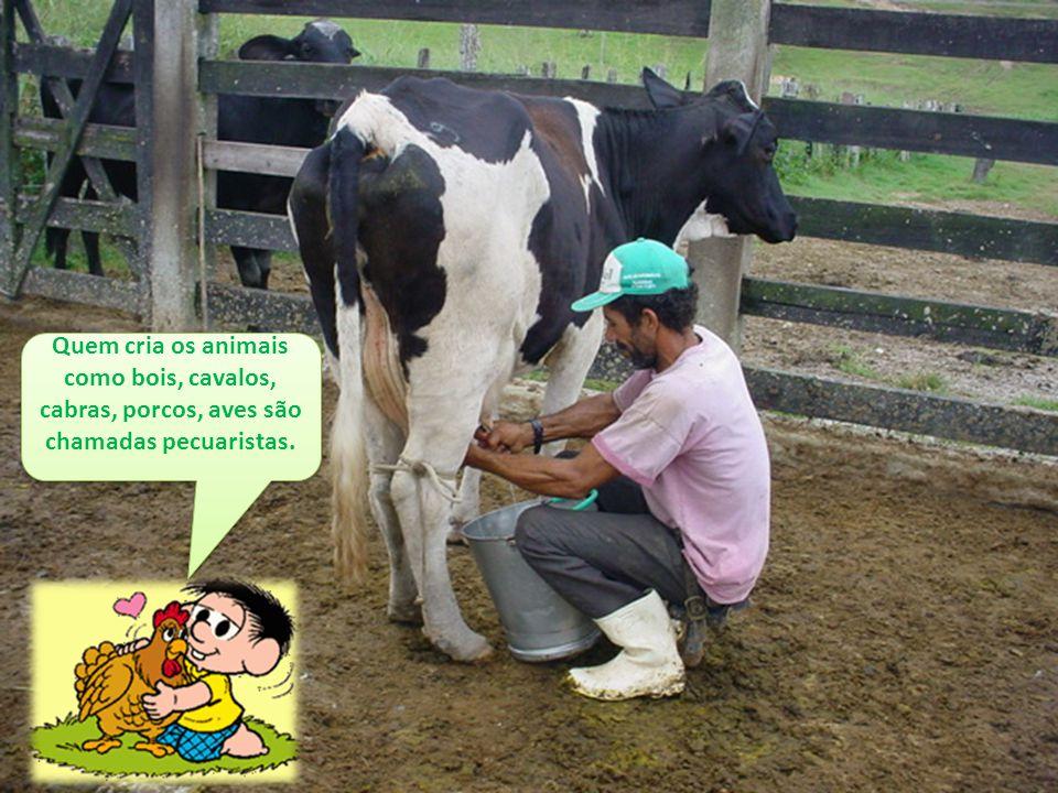 Quem cria os animais como bois, cavalos, cabras, porcos, aves são chamadas pecuaristas. Quem cria os animais como bois, cavalos, cabras, porcos, aves