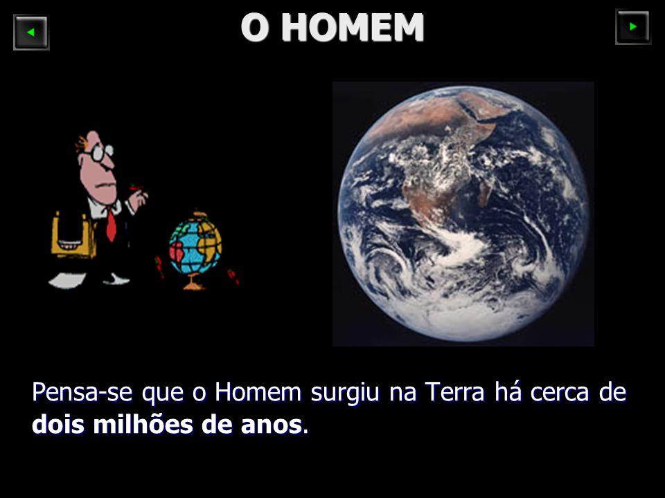 O HOMEM Pensa-se que o Homem surgiu na Terra há cerca de dois milhões de anos.