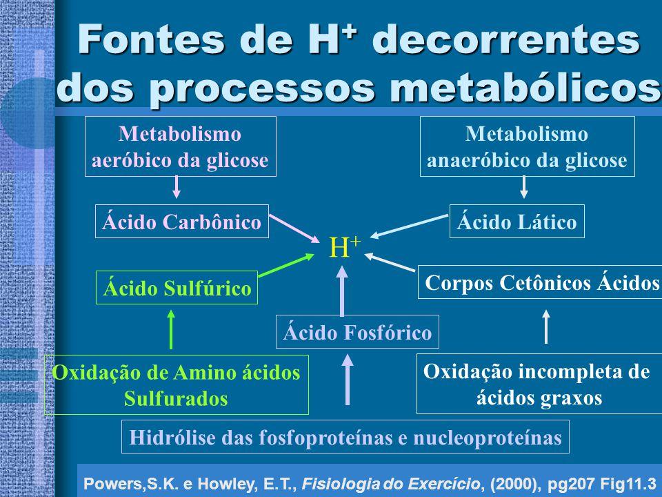 Fontes de H + decorrentes dos processos metabólicos Powers,S.K.