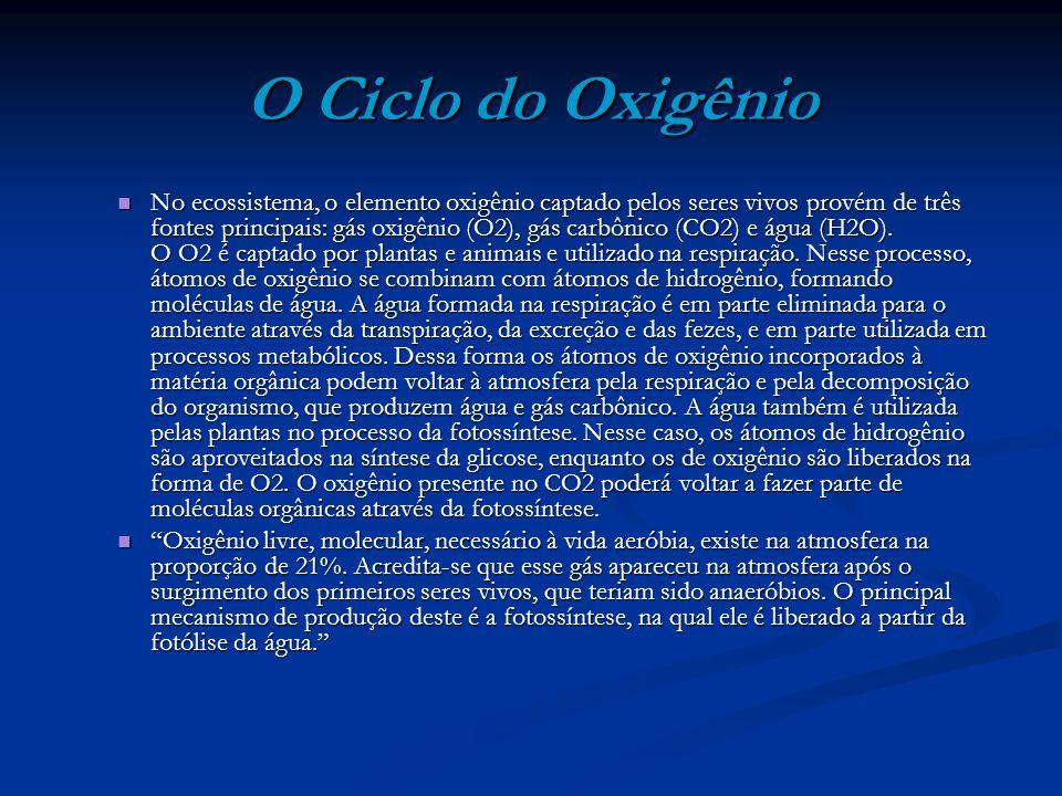 O Ciclo do Oxigênio No ecossistema, o elemento oxigênio captado pelos seres vivos provém de três fontes principais: gás oxigênio (O2), gás carbônico (