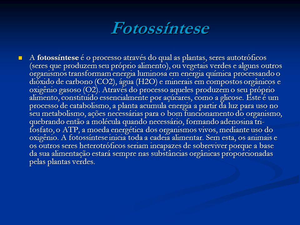 Fotossíntese Fotossíntese A fotossíntese é o processo através do qual as plantas, seres autotróficos (seres que produzem seu próprio alimento), ou veg