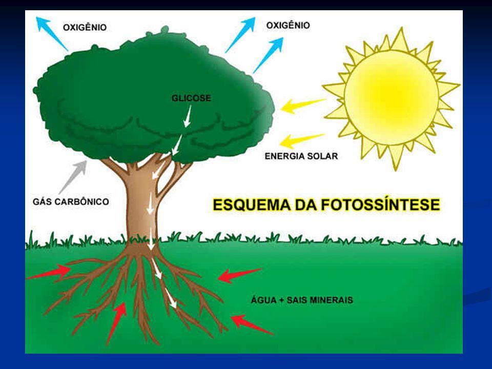 O Buraco na Camada de Ozônio O Buraco A camada de ozônio é uma capa desse gás que envolve a Terra e a protege de vários tipos de radiação, sendo que a principal delas, a radiação ultravioleta, é a principal causadora de câncer de pele.