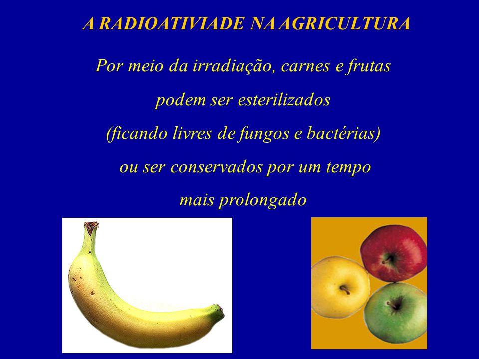 Por meio da irradiação, carnes e frutas podem ser esterilizados (ficando livres de fungos e bactérias) ou ser conservados por um tempo mais prolongado A RADIOATIVIADE NA AGRICULTURA