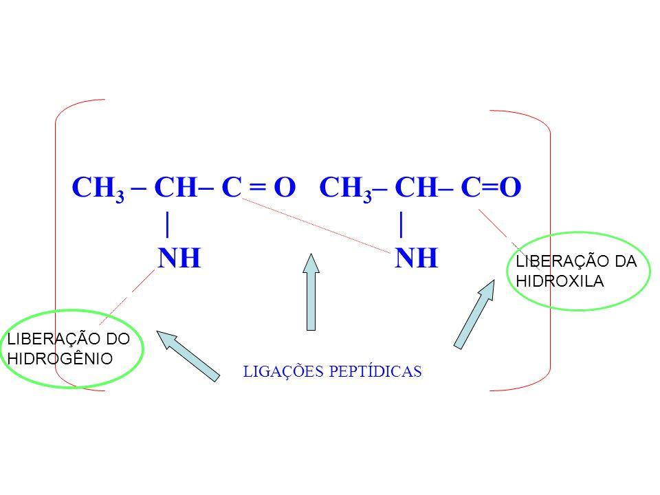 CH 3 CH C = O CH 3 – CH– C=O | | NH NH LIGAÇÕES PEPTÍDICAS LIBERAÇÃO DO HIDROGÊNIO LIBERAÇÃO DA HIDROXILA