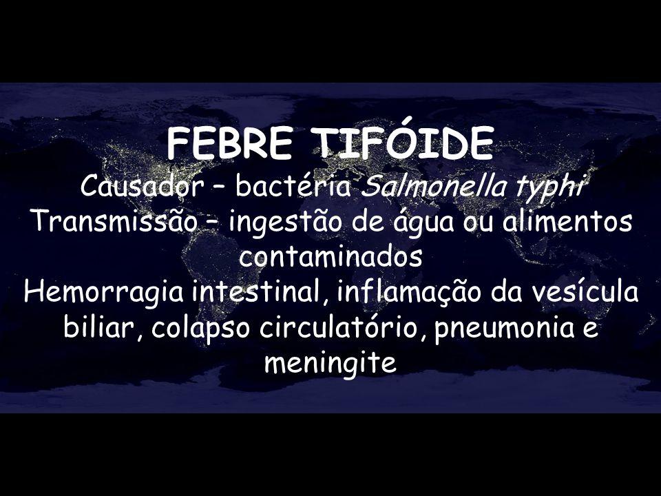 FEBRE TIFÓIDE Causador – bactéria Salmonella typhi Transmissão – ingestão de água ou alimentos contaminados Hemorragia intestinal, inflamação da vesíc