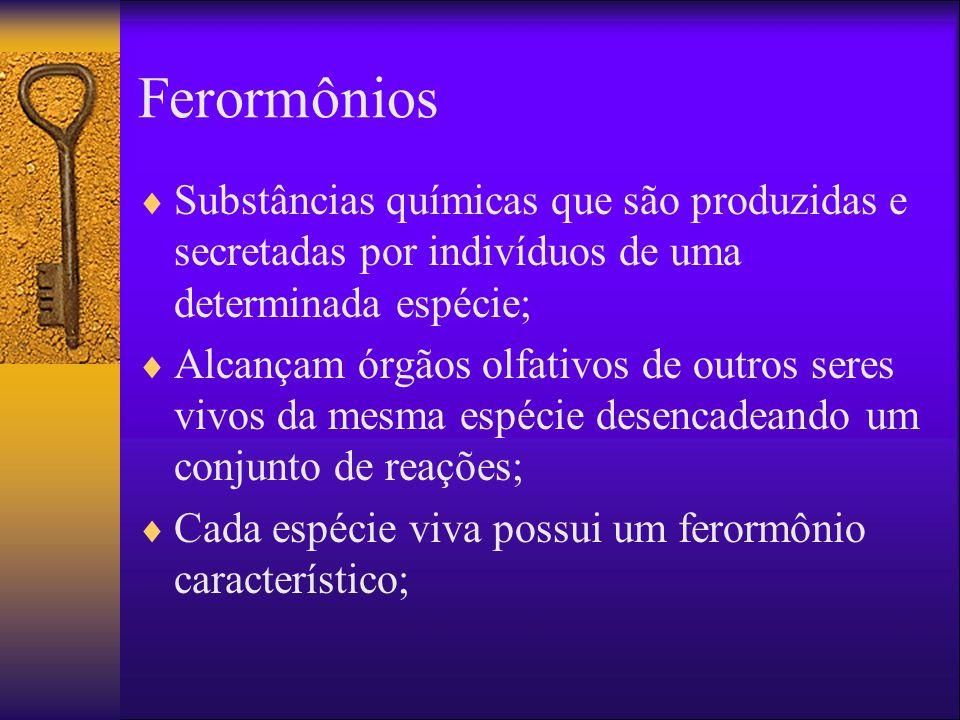 Ferormônios Substâncias químicas que são produzidas e secretadas por indivíduos de uma determinada espécie; Alcançam órgãos olfativos de outros seres vivos da mesma espécie desencadeando um conjunto de reações; Cada espécie viva possui um ferormônio característico;