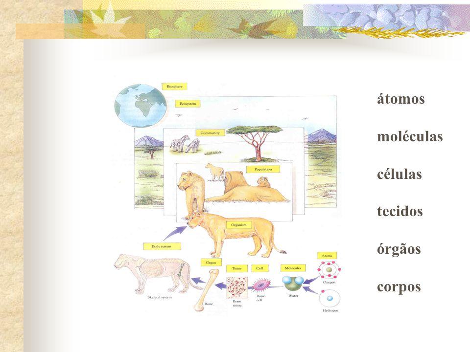 átomos moléculas células tecidos órgãos corpos