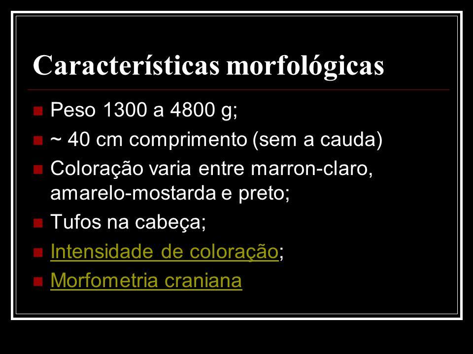 Características morfológicas Peso 1300 a 4800 g; ~ 40 cm comprimento (sem a cauda) Coloração varia entre marron-claro, amarelo-mostarda e preto; Tufos