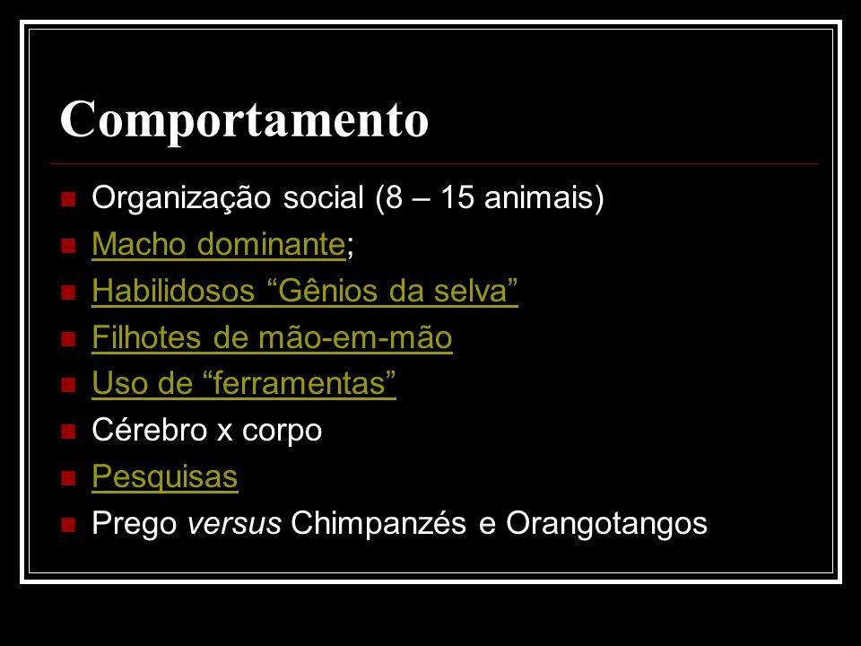 Comportamento Organização social (8 – 15 animais) Macho dominante; Macho dominante Habilidosos Gênios da selva Filhotes de mão-em-mão Uso de ferrament